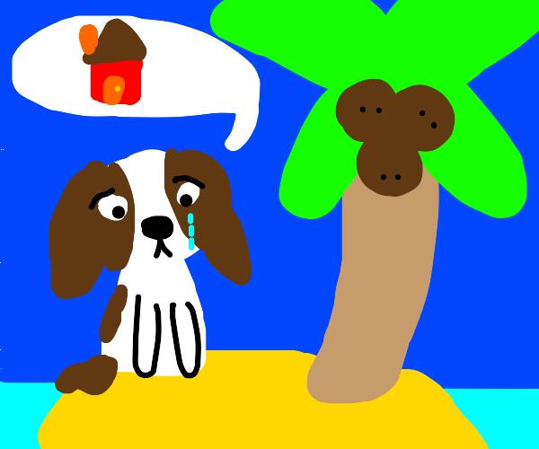 homesick dog on an island