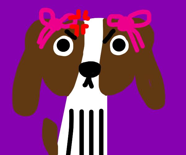 angry dog girl