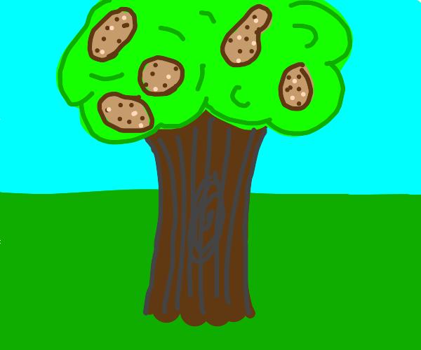 A tree that grows potatos