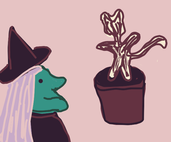 witch grows a cat tree