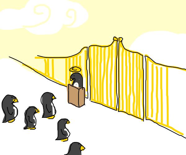 penguin heaven