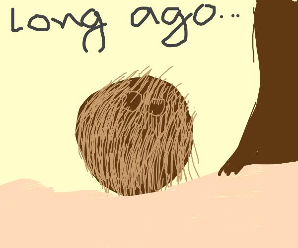 Prehistoric Coconuts