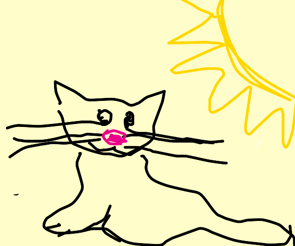 Cat being melted by the sun