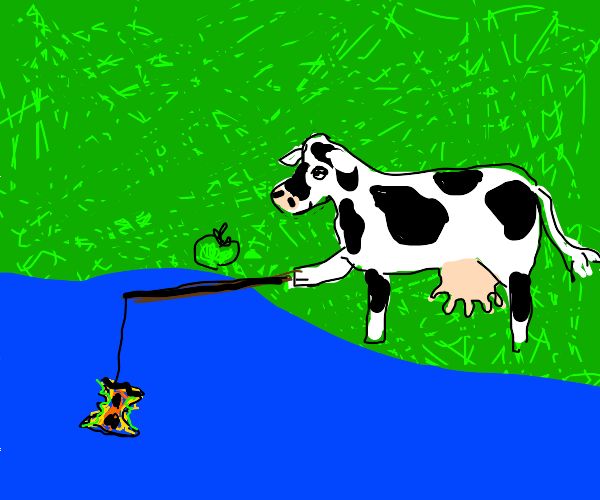 Cow using orange apple core as fish bait