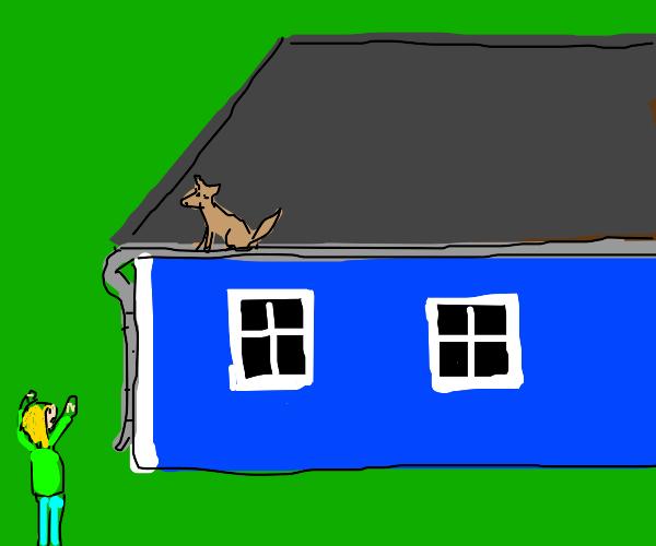 Doggo, get off the roof!