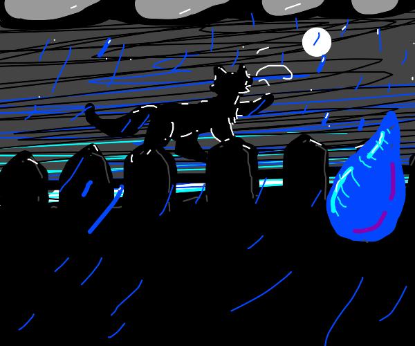 Black cat singing in the rain
