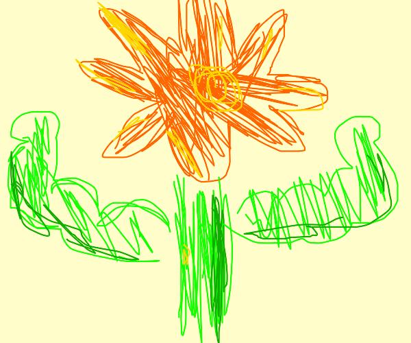 Strong flower. Buff.