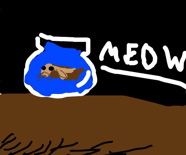 Pet Catfish