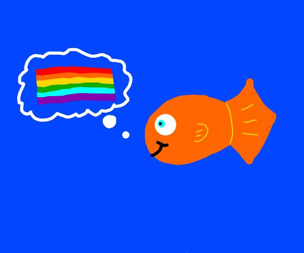 gay pride goldfish