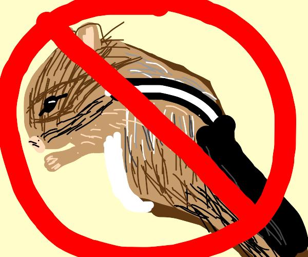 not a chipmunk