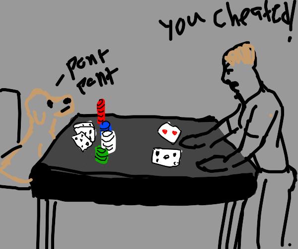 Dog beats dude at cards