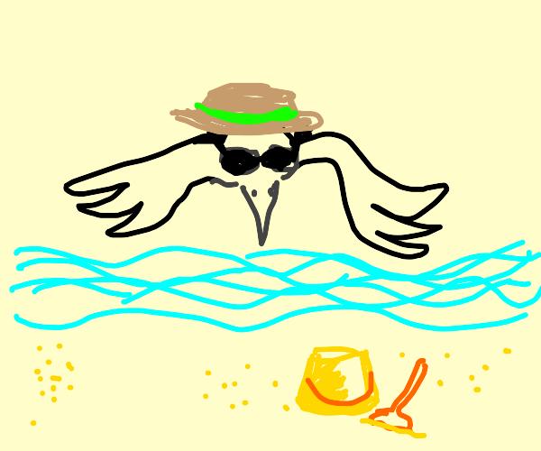 Raven on vacation