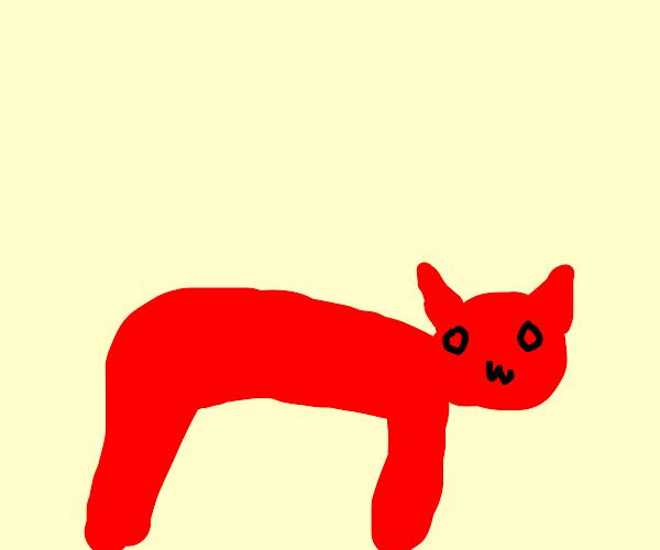 Cute little demon cat