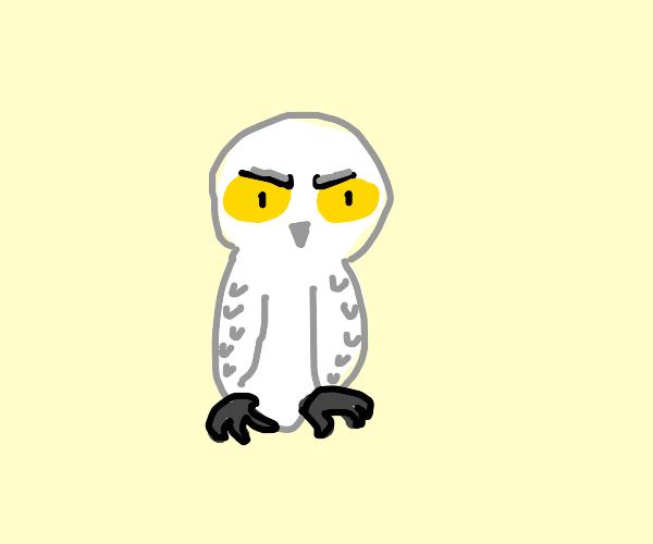 angry snow owl