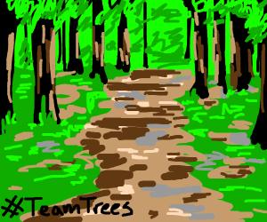 Forest landscape #TeamTrees