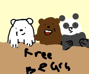 Little bears in a box (We bare bears)