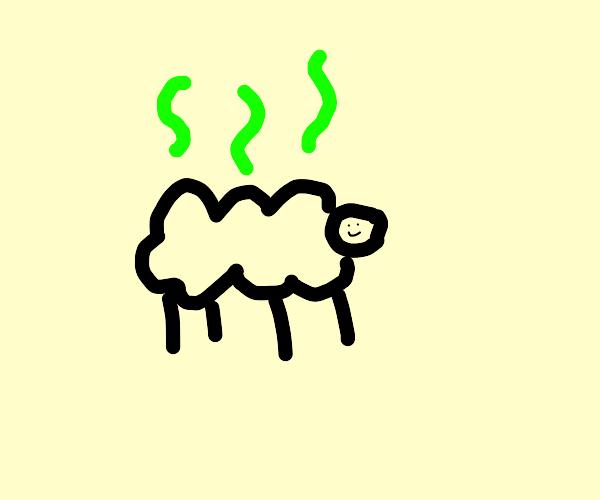 A smelly sheep