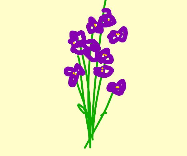 A bouquet of violets