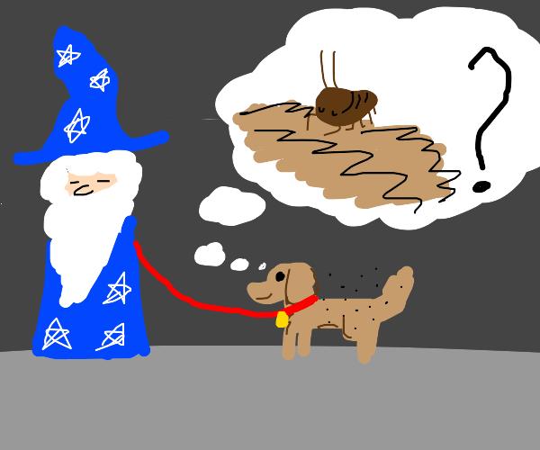 Wizard's dog forgot he has flees
