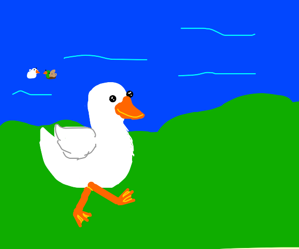 a duck going on a walk
