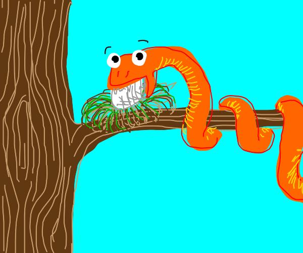 Snake eats egg