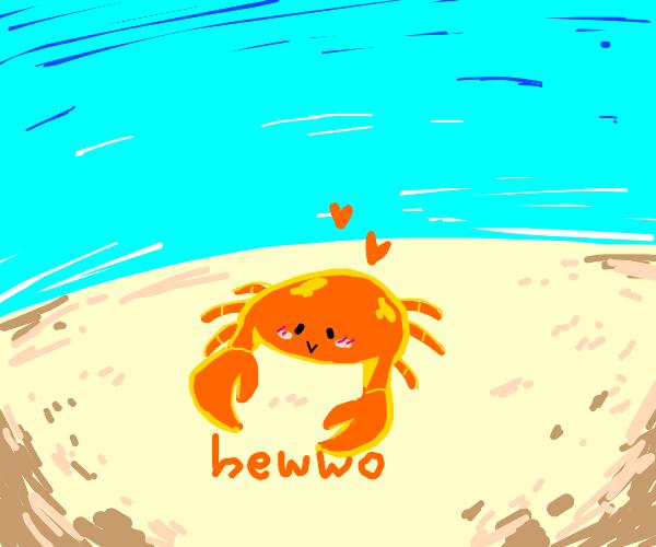 hi little crab