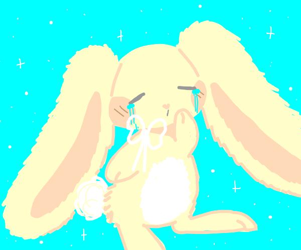 Bunny is upset