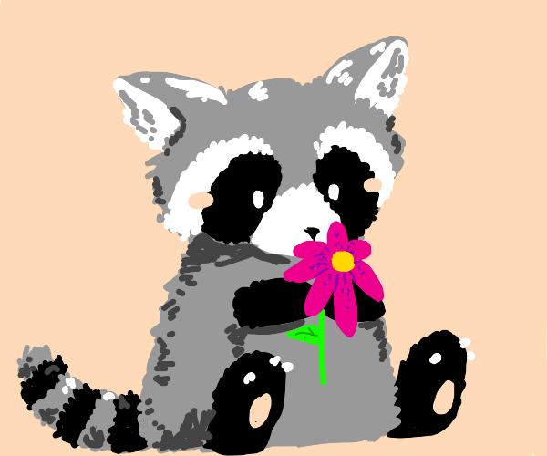 Raccoon holding a flower