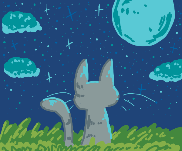 cat gazing at the moon