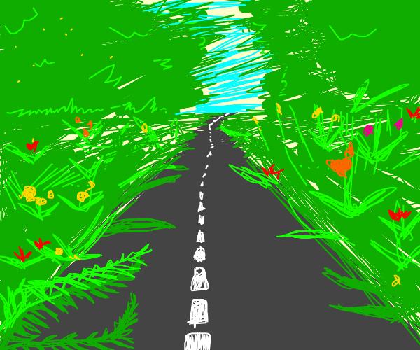 Road in between flowers