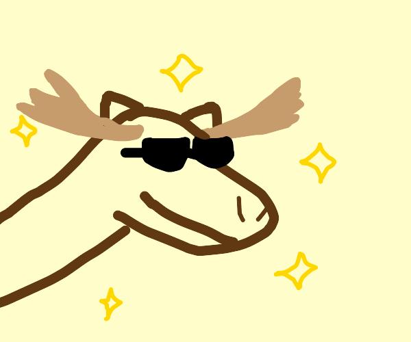 The Amazing Moose