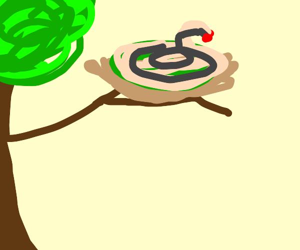 Rattlesnake in a Nest