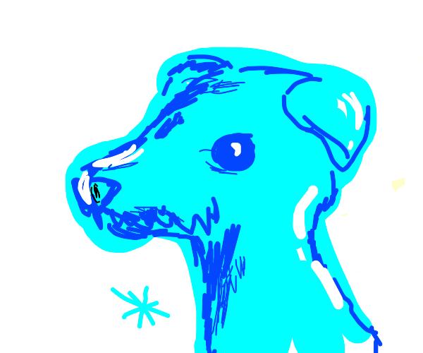 World's coolest dog