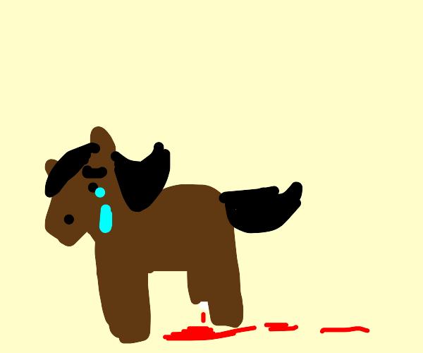 horse broke his/her leg