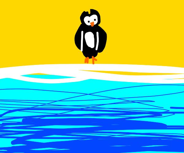 Penguin on a beach