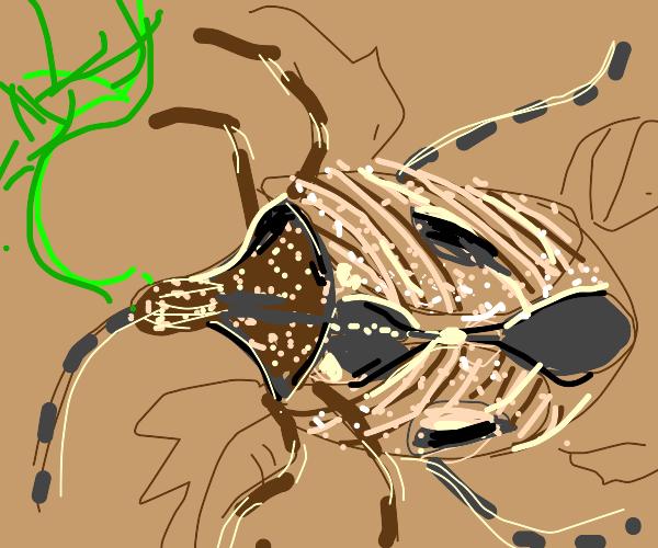 Weird Zebra Bug shoots GREEN WEB