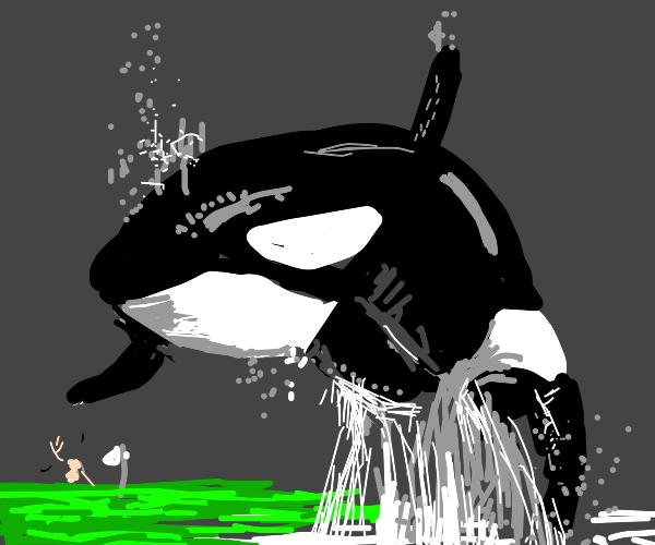 Killer whale flies over golf island