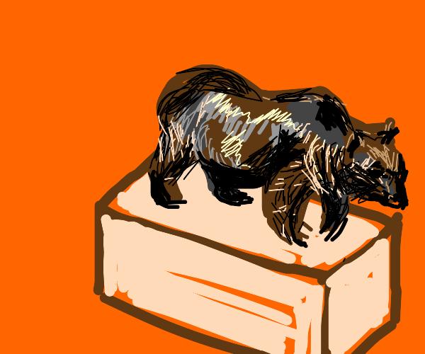 Bear Box Cover
