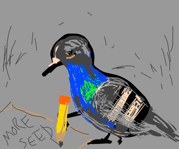 Pigeon Writer