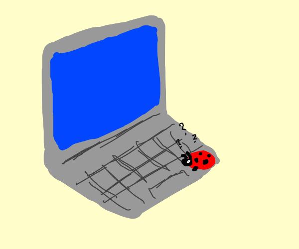 Ladybird doesn't understand laptops