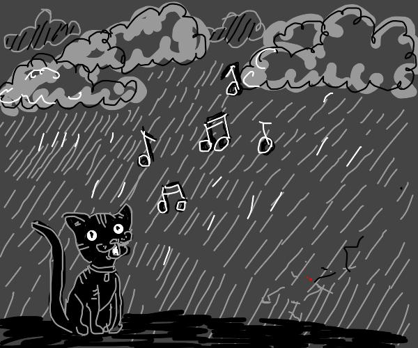 Cat singing during rain