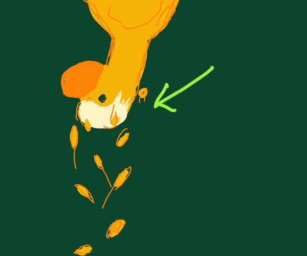 Upside-down duck is going bald!