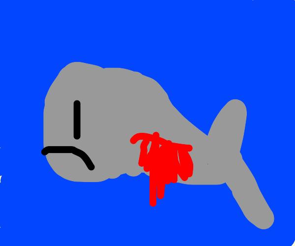 Whale Bustin'