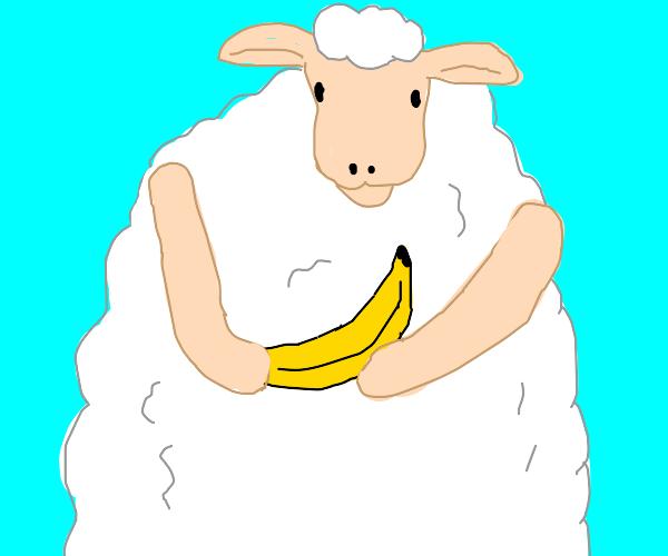 Sheep has bannana
