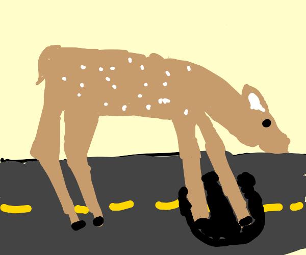 Deer digging into the Highway