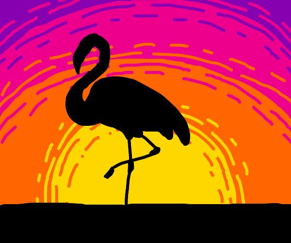 flamingo and sunset