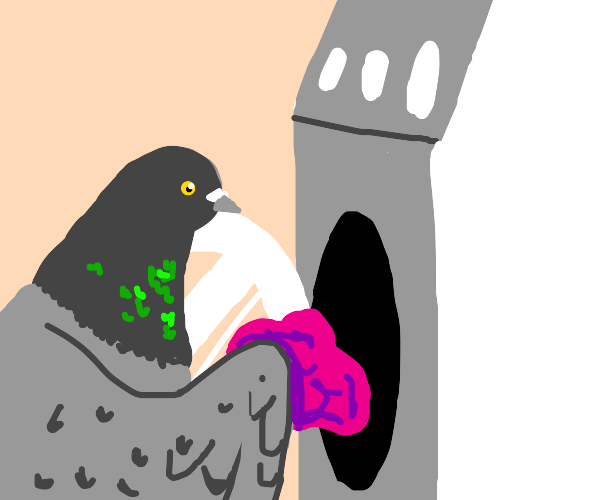 Pigeon does Laundry