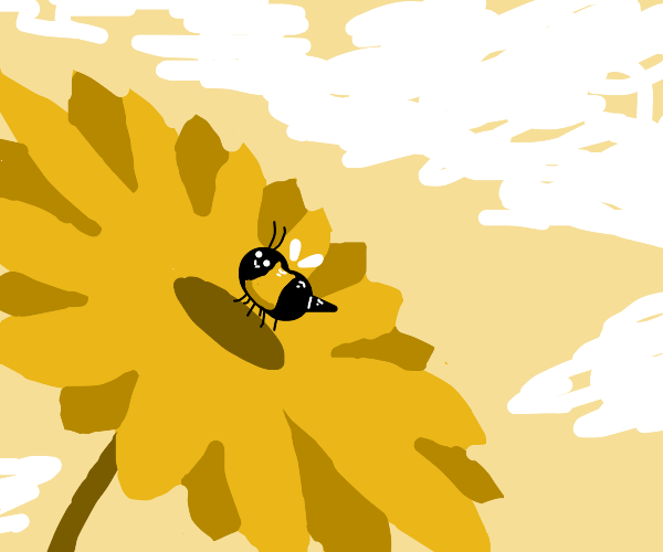 Happy bee landing on a sunflower