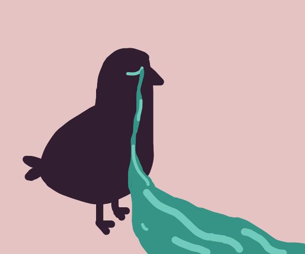 sad bird crying a river