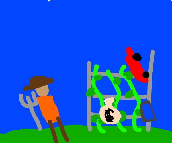 farmer grows everything on vines